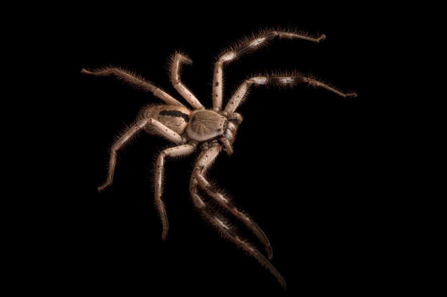 Невероятно красивые пауки, которые помогут вам победить арахнофобию