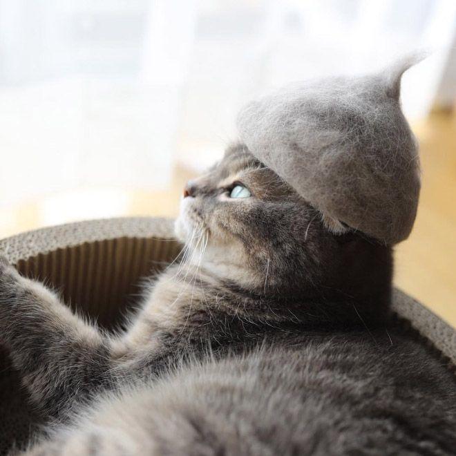 Кошки в колпаках из собственной шерсти