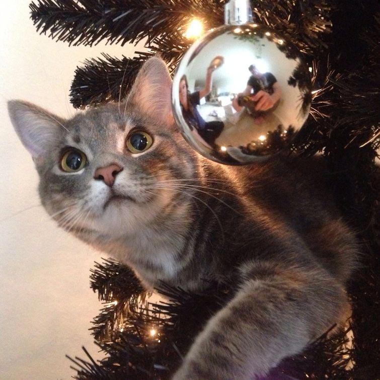 20 смешных котов празднующих Рождество и Новый год
