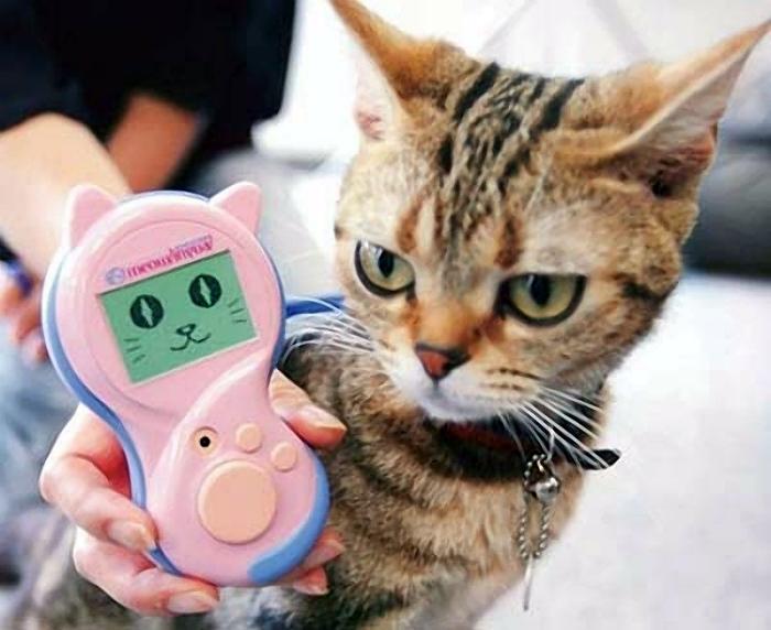 17 гаджетов для дома, в котором есть кот