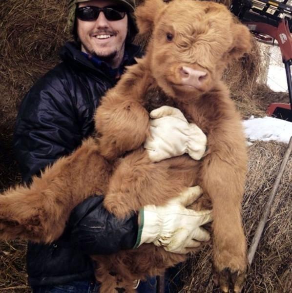 Максимально милые малыши животных