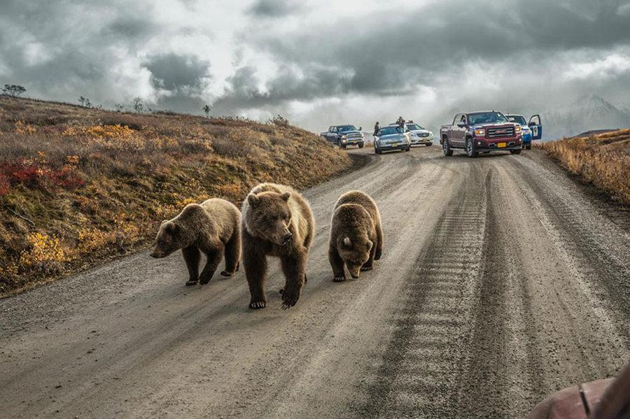 Лучшие фотографии 2016 года от National Geographic
