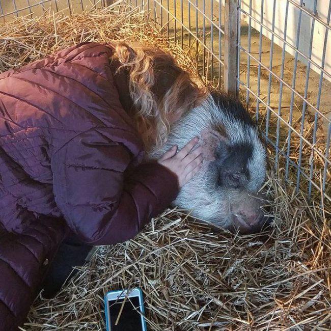Свинья чудом пережила пожар