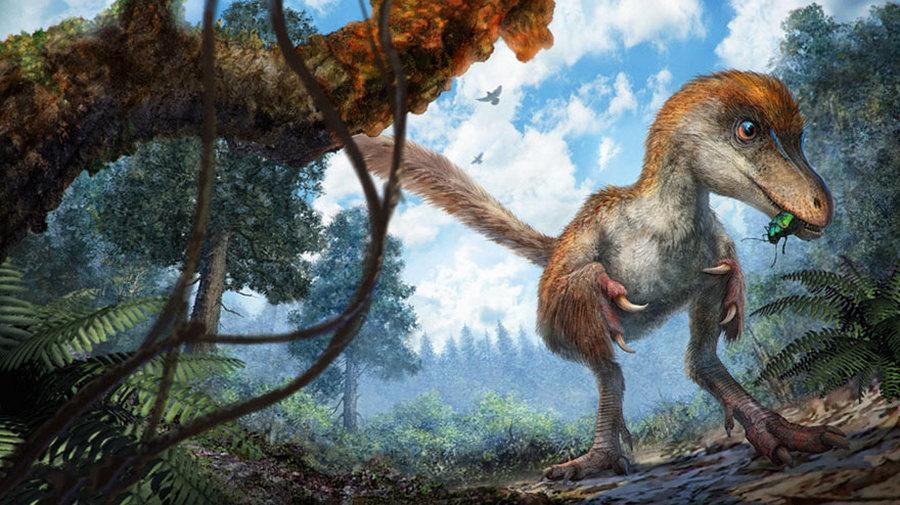 В янтаре нашли хвост оперённого динозавра возрастом 99 миллионов лет