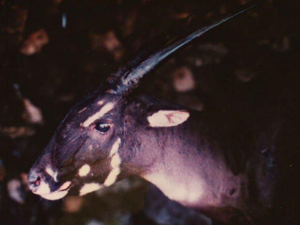 Исчезающие виды животных, которые могут исчезнуть в этом столетии