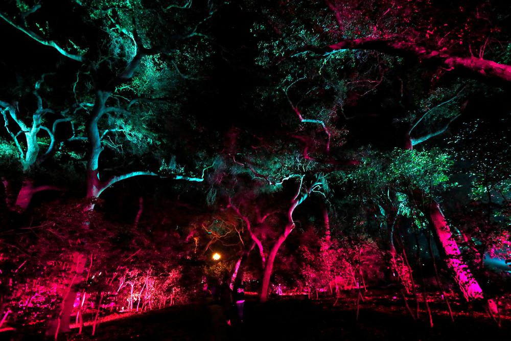 Лес света - выставка в США