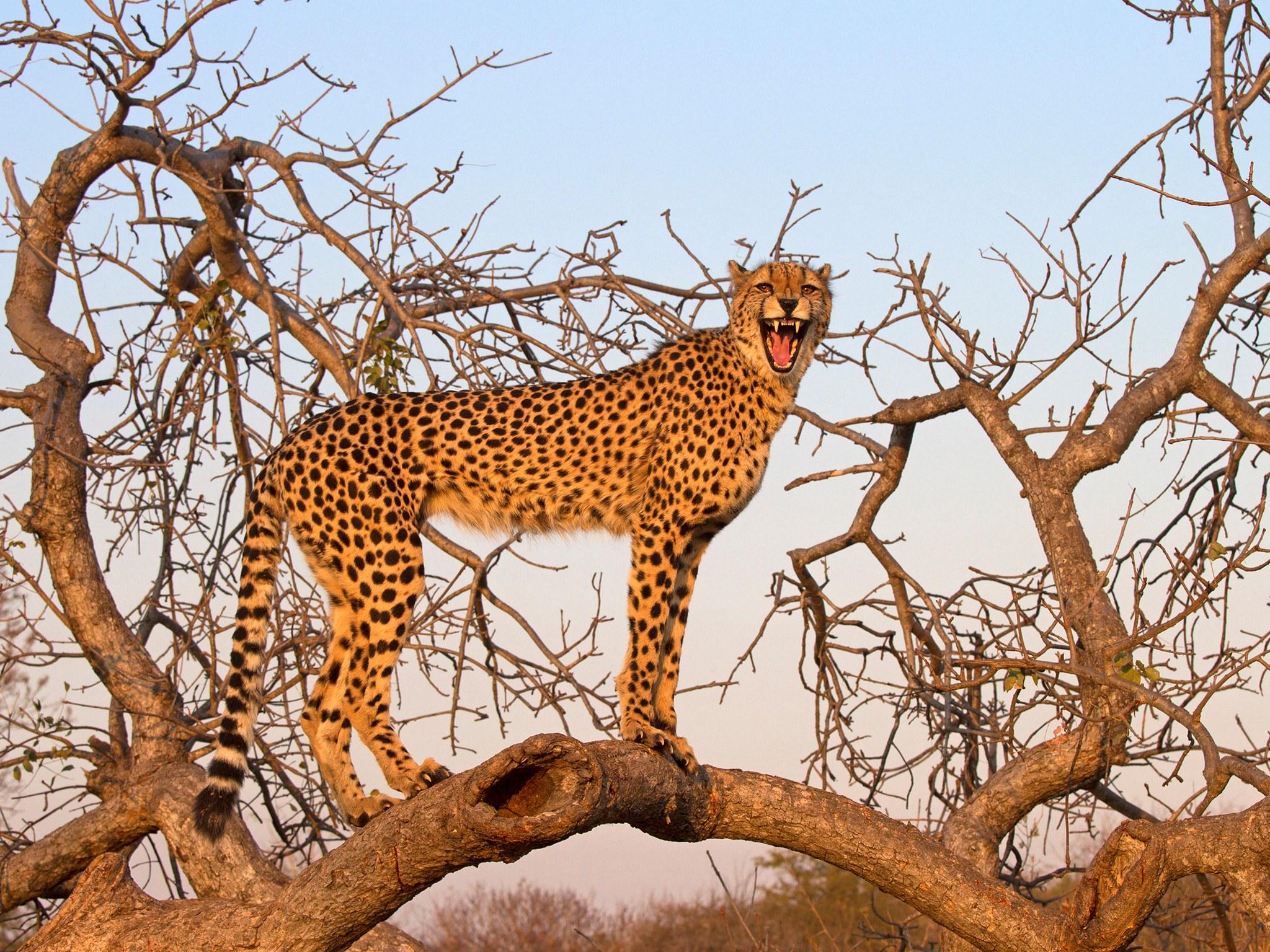 Где в мире можно посмотреть на диких животных