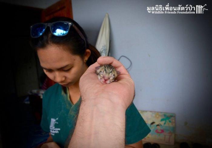 Найденный на улице Таиланда котенок оказался не совсем обычным