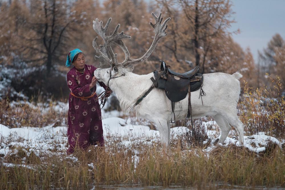 Три дня в гостях у семьи монгольских оленеводов