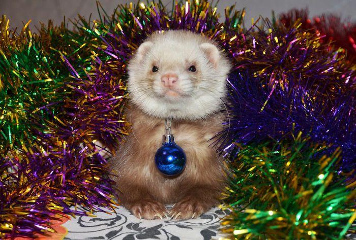 Животные, которые совсем не в восторге от Нового года и Рождества