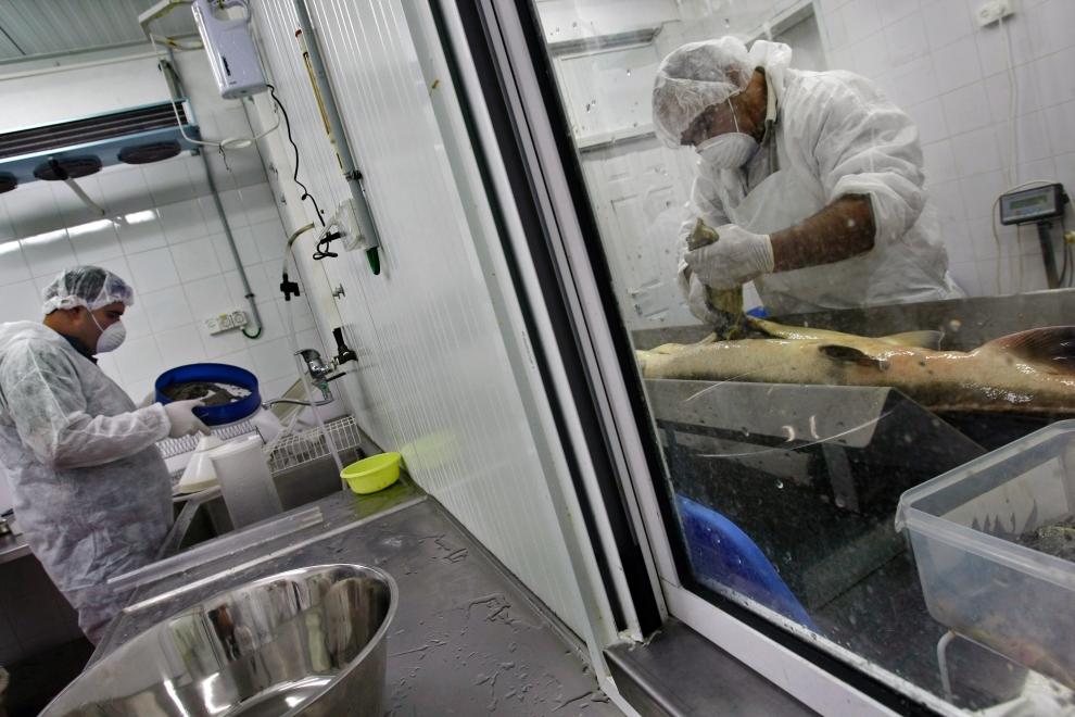 Как в Израиле производят черную икру