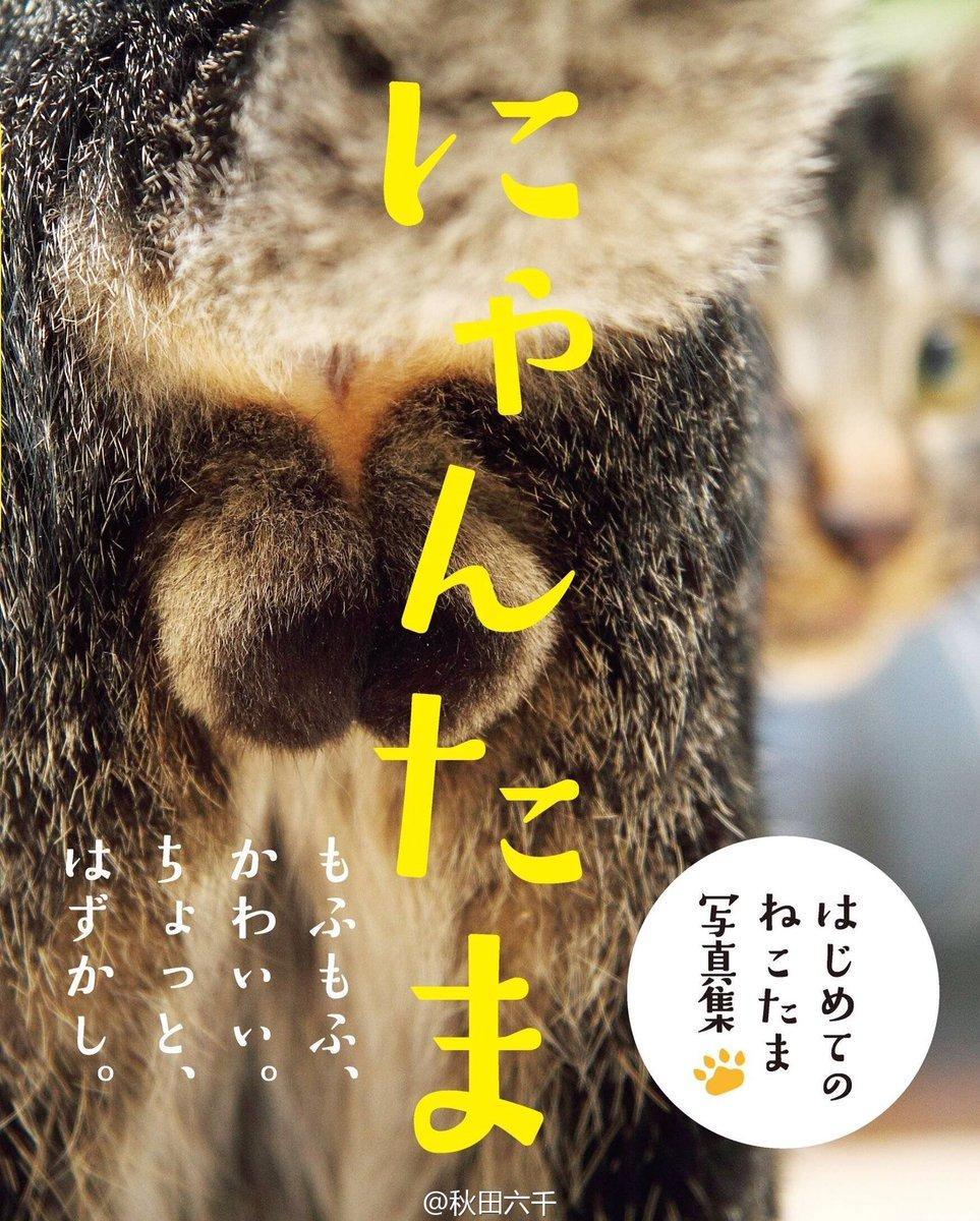 Пушистые шары - книга снимков яичек котов