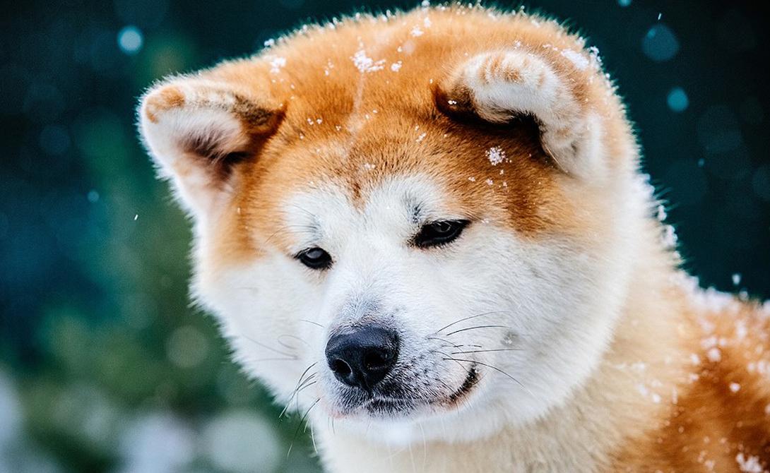 10 самых умных животных мира