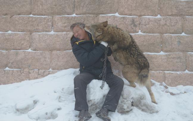 Бизнесмен из Китая содержит волчью стаю в 150 голов