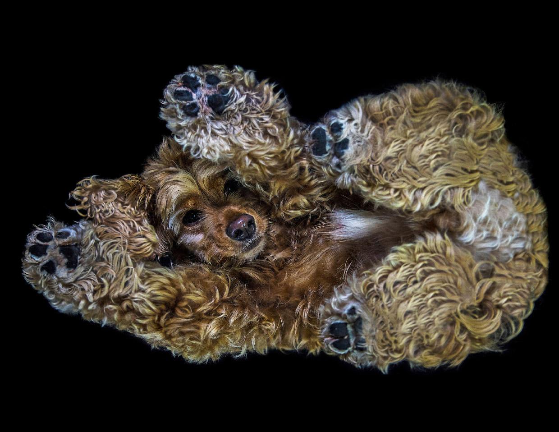 Необычный взгляд на собак снизу