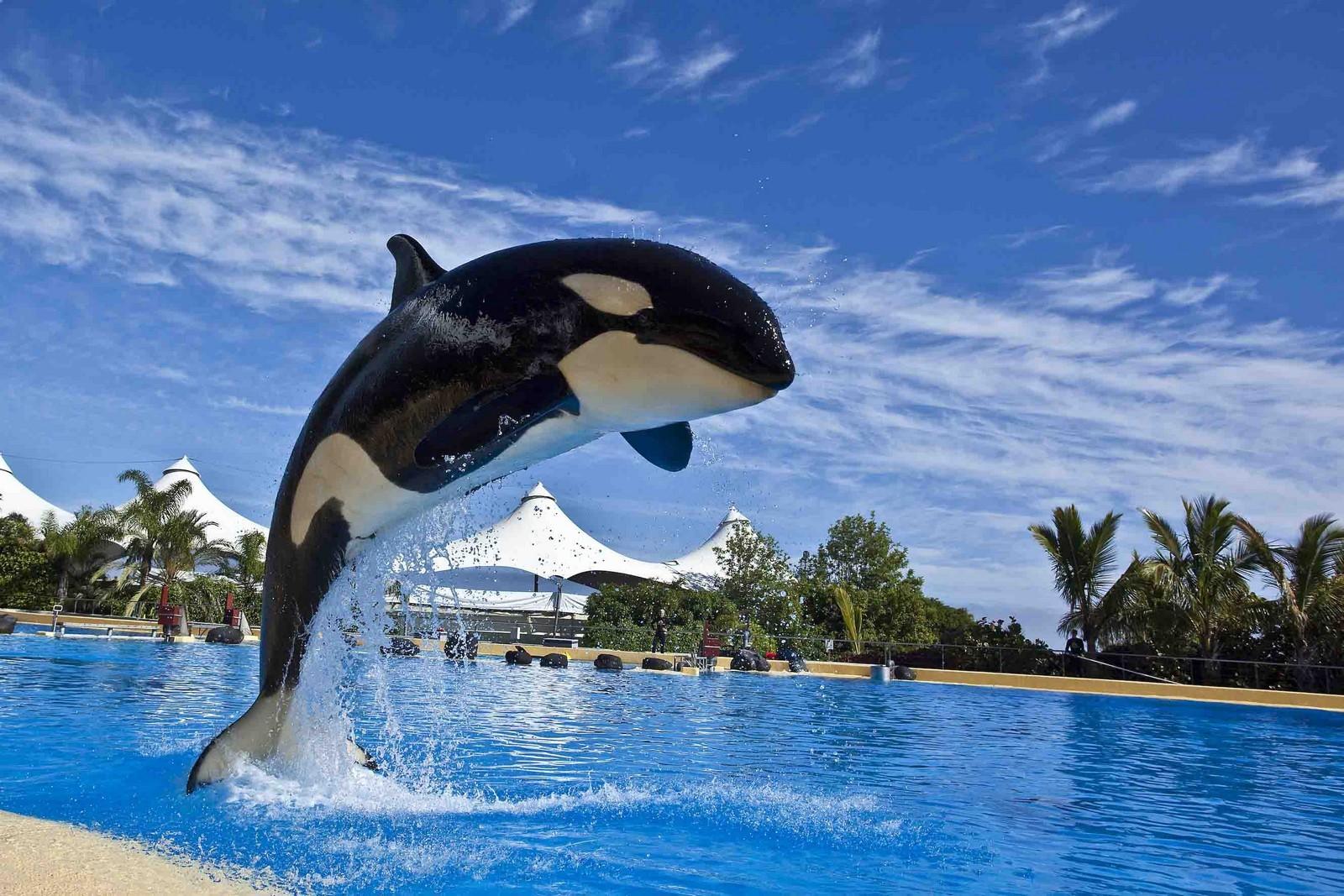 Самые красивые зоопарки мира