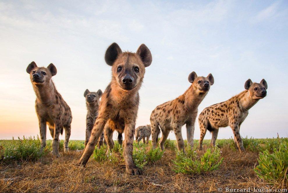 Дикие животные с близкого расстояния