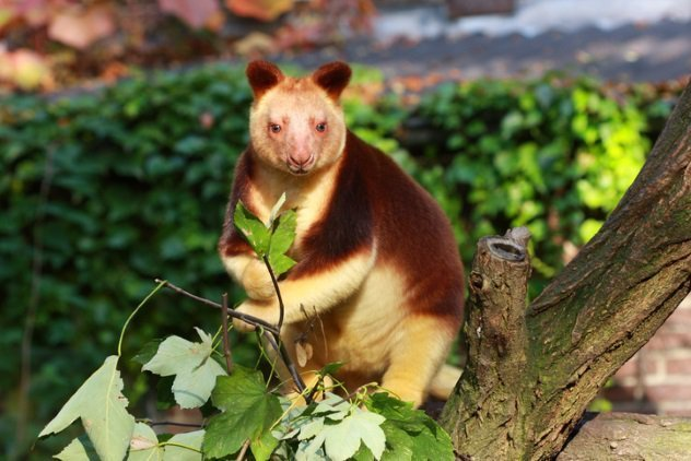 Поразительные виды животных на грани исчезновения
