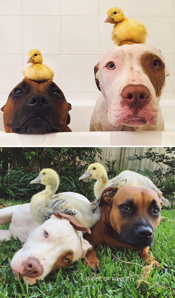 Животные, которые выросли вместе: тогда и сейчас