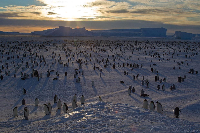 Ледяная красота от Пола Никлена