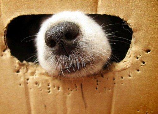 Собаки, которые тоже любят сидеть в коробках