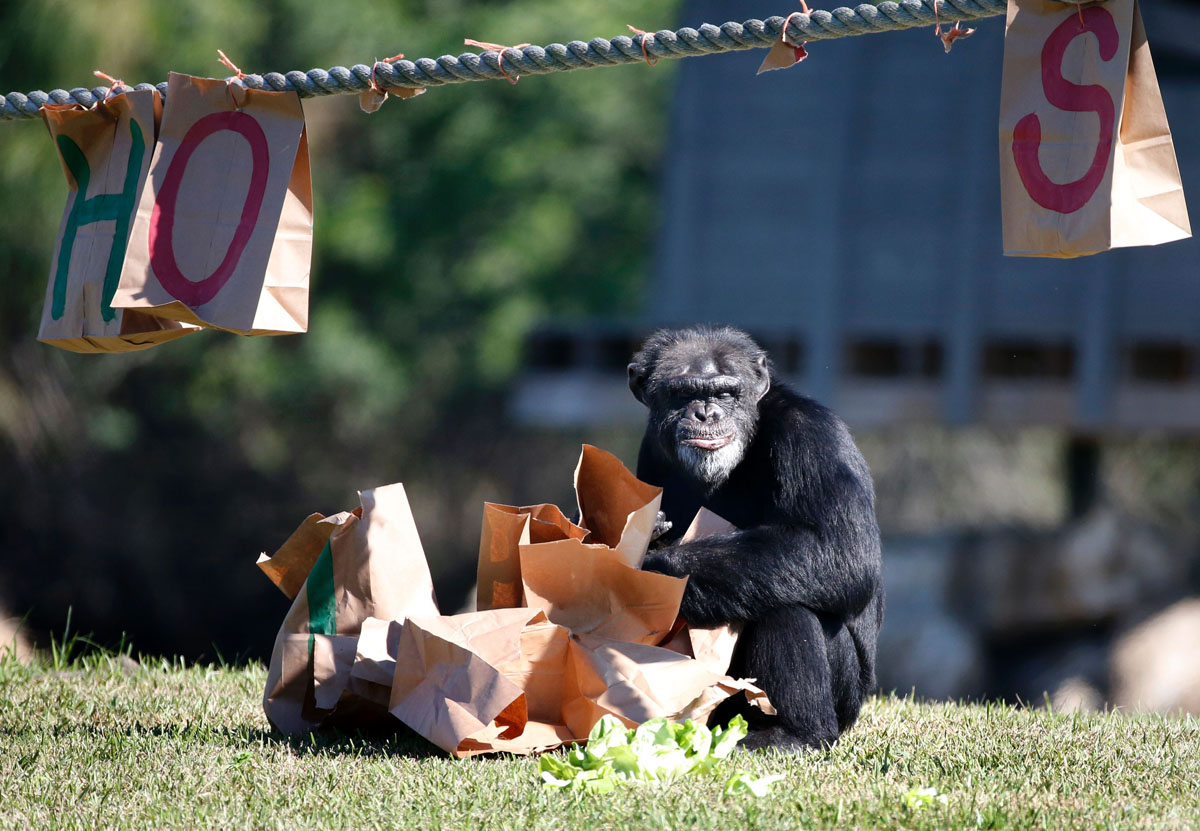 Как жители зоопарков открывали подарки
