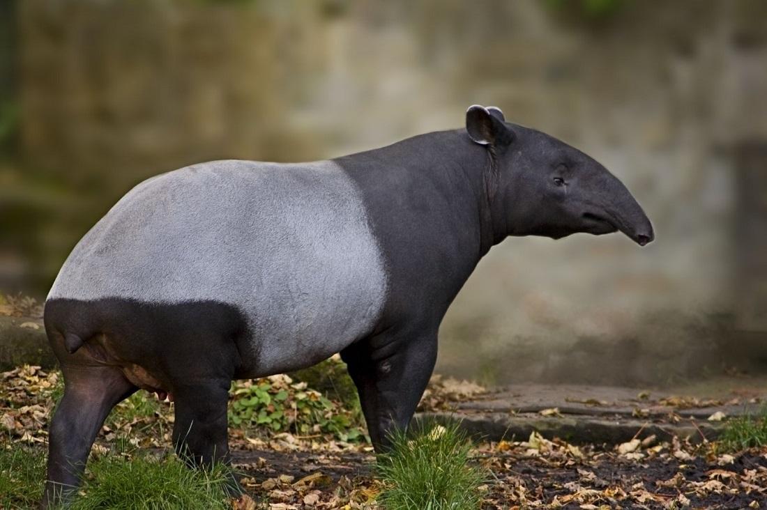 10 самых необычных животных в мире