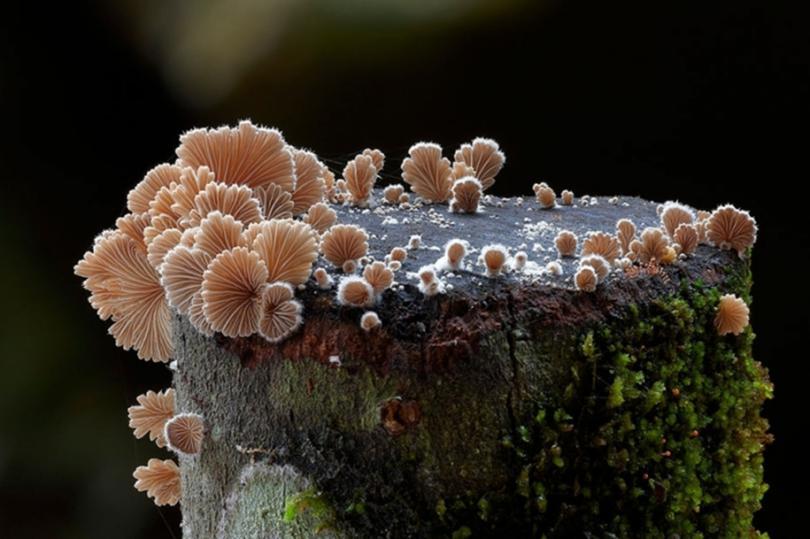 Красота грибов и лишайников от Стива Эксфорда