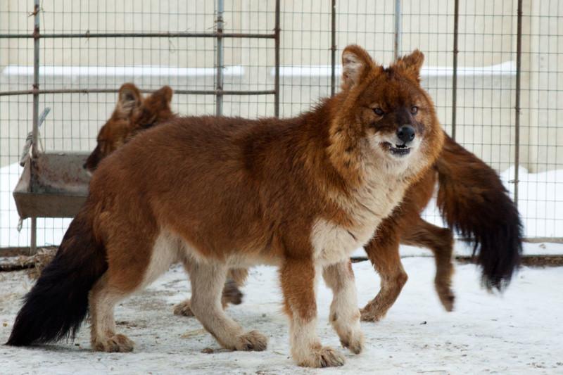 10 удивительных животных, которые обитают в России