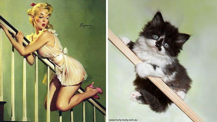 Кошки в образе pin-up