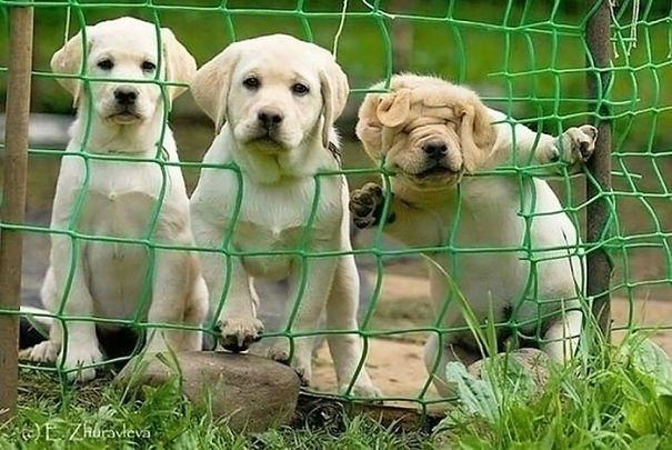 Забавные собаки, которые застряли и встряли