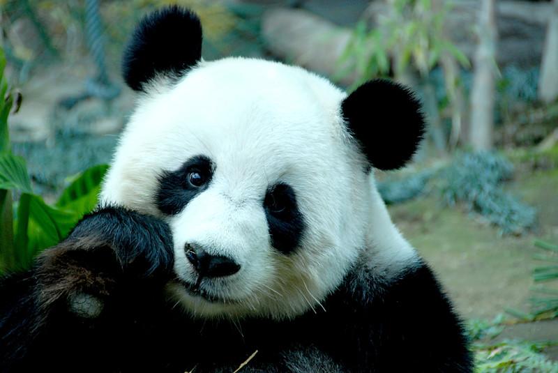20 интересных фактов о животных, которые вы не слышали