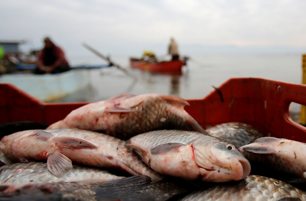 шуруповерт с буром для зимней рыбалки