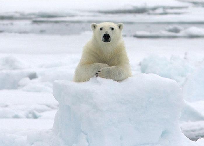 15 поразительных фактов о животных, которые замалчивают ученые