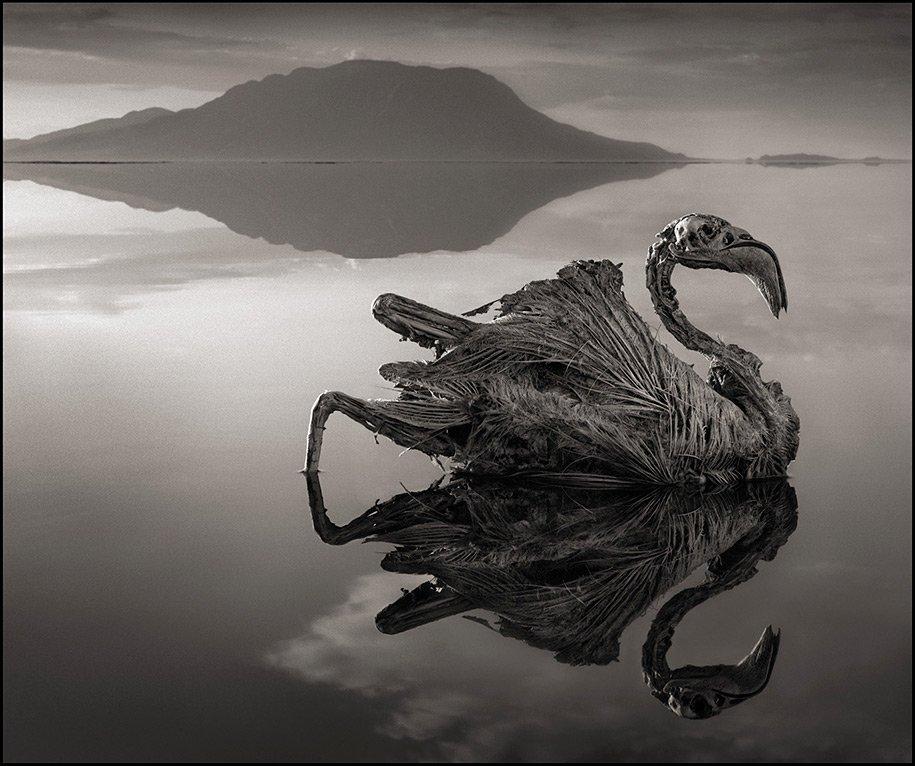 Смертоносное озеро превращает животных в камни