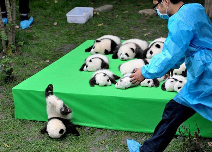 Фейлы и забавные случаи с животными