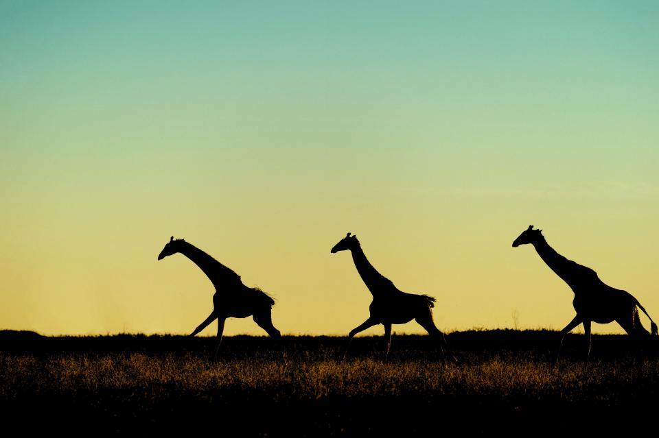 Потрясающие снимки с силуэтами африканских животных