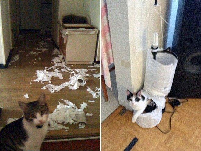 Бесцеремонные коты