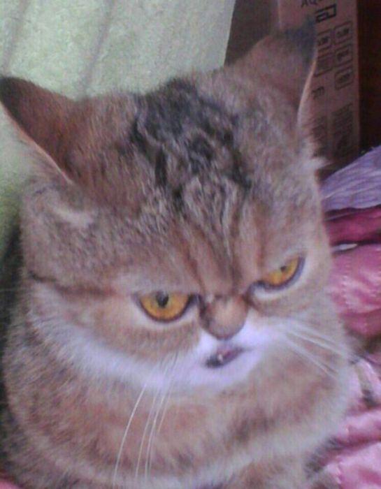 Когда ты кот и плохо получаешься на фото