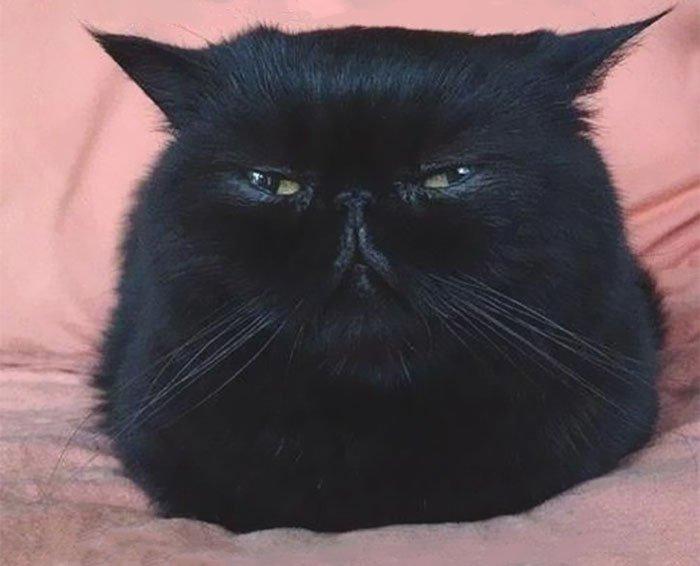 Самые недовольные коты