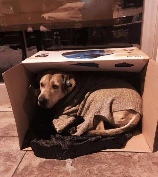 Жители Стамбула помогали бездомным животным во время похолоданий