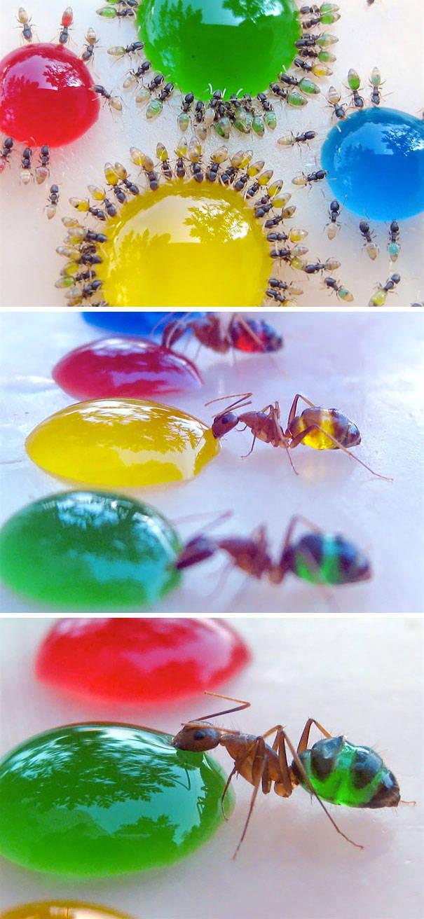Удивительные полупрозрачные животные