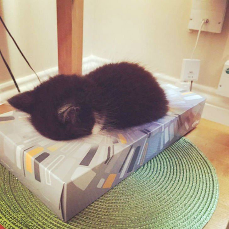 Животные спят где хотят и с максимальным комфортом