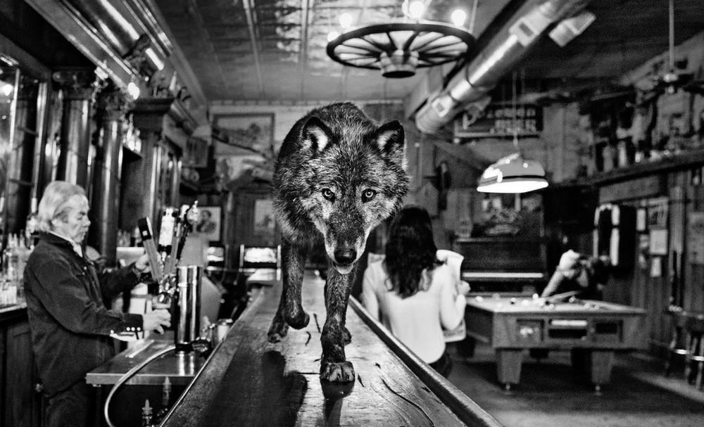 Дикие встречи от фотографа Дэвида Ярроу
