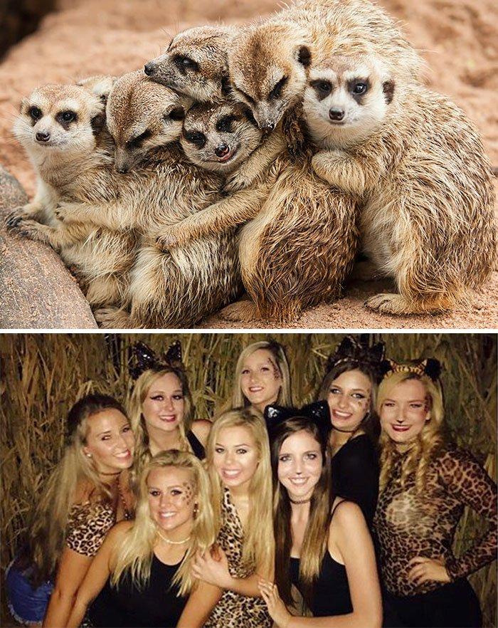Девушки на снимках очень похожи на сурикатов
