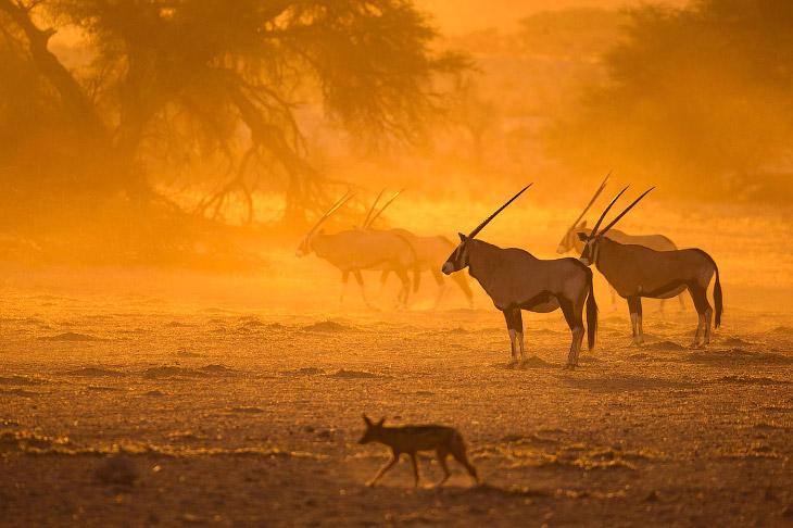 Неповторимая Африка в объективе Кейта Коннели