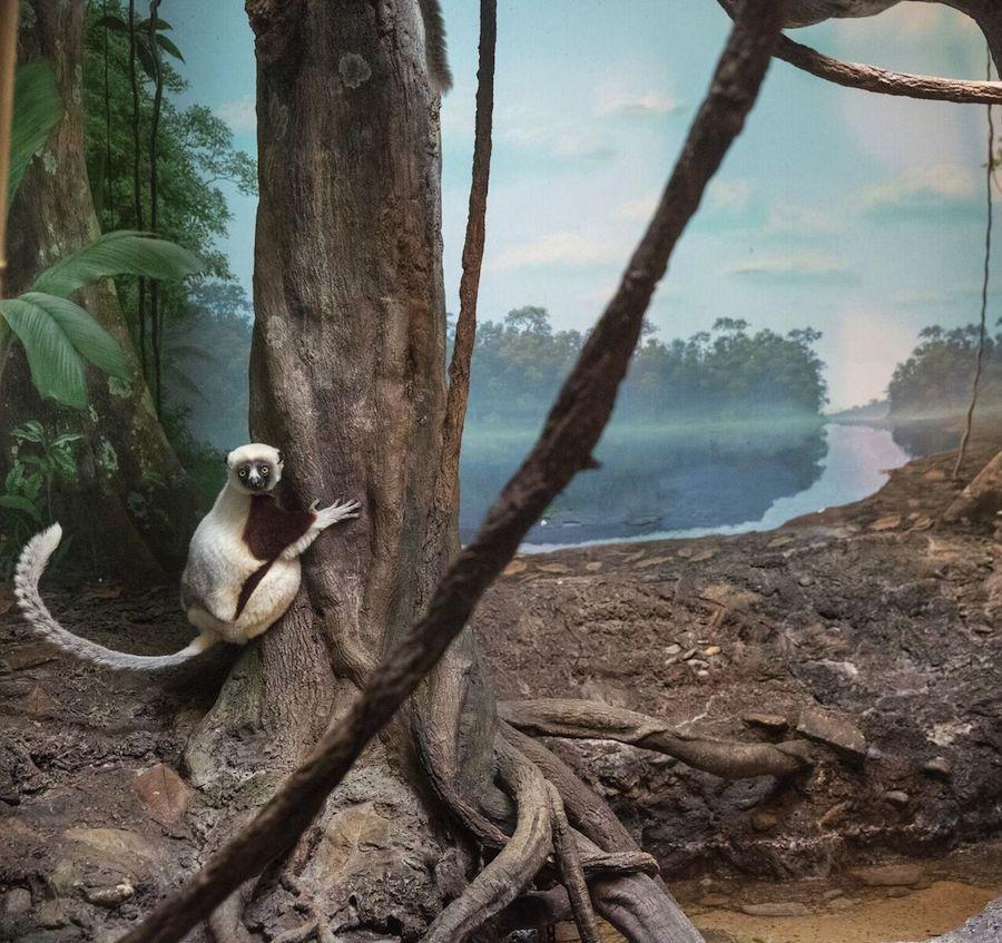 Грустные фотографии животных в неволе