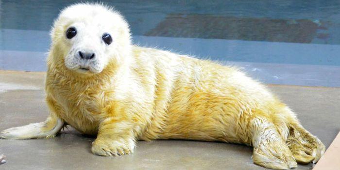 Зоопарки и океанариумы делятся снимками своих питомцев