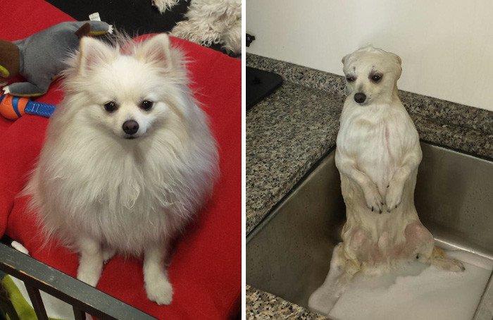 27 забавных собак, до и после принятия ванны