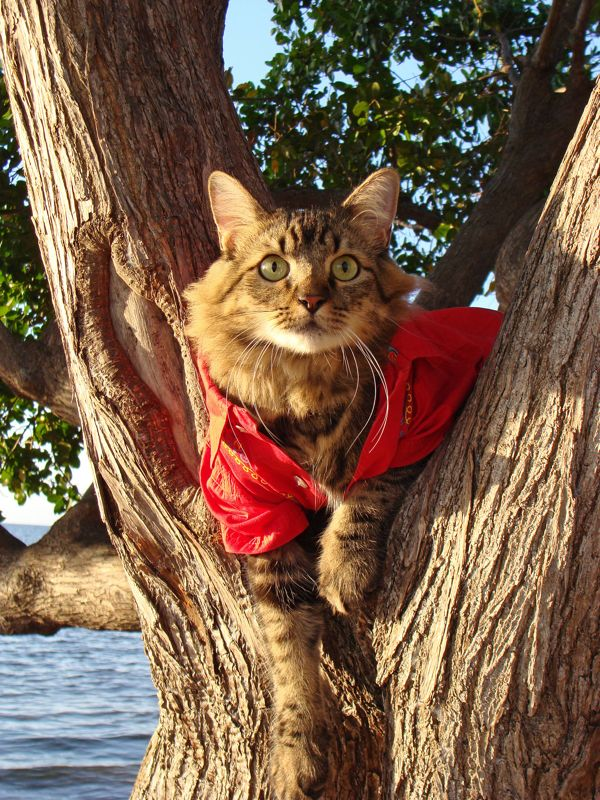Нарядный кот Лоренцо